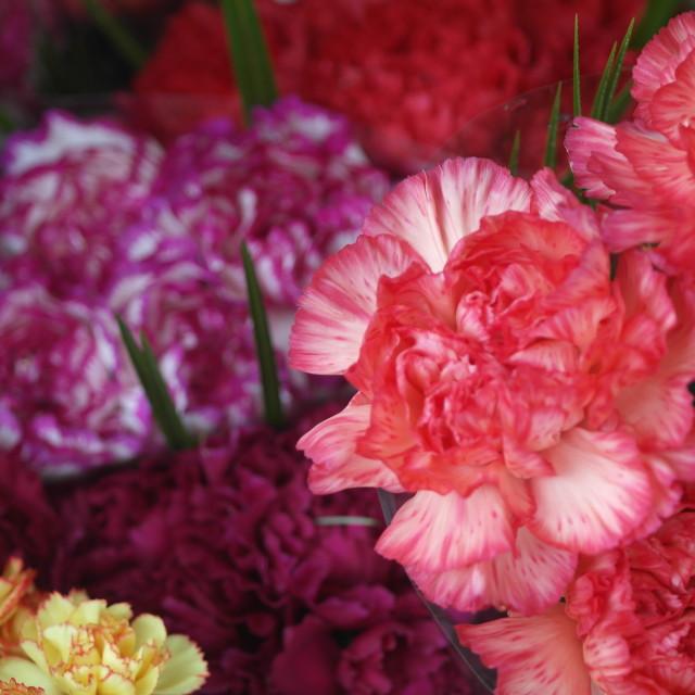 """Floral Fun!"" stock image"
