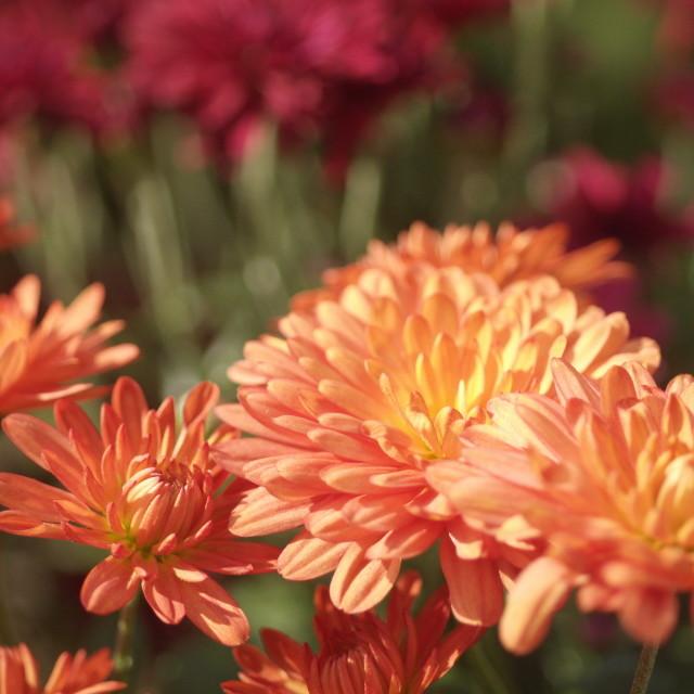 """Striking Flowers"" stock image"