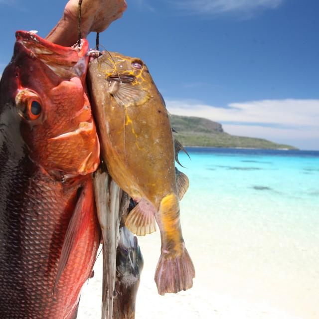 """ASIA EAST TIMOR TIMOR LESTE JACO ISLAND"" stock image"