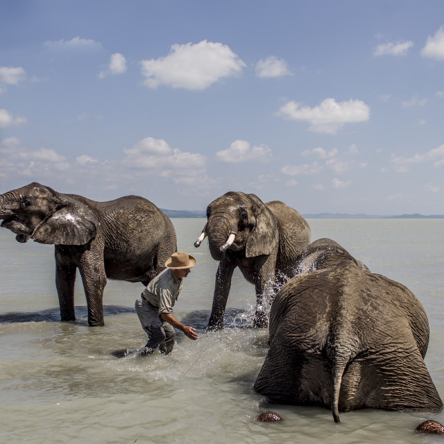 """Elephants in the Balaton"" stock image"