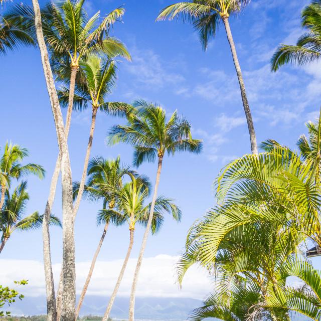 """Maui"" stock image"