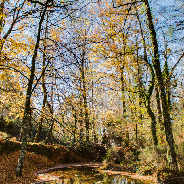 """""""Autumn view of national park of geres"""" stock image"""