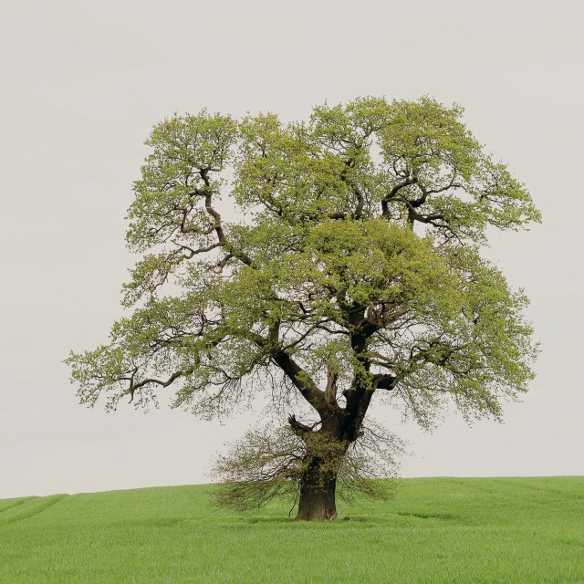 """Tree in field"" stock image"