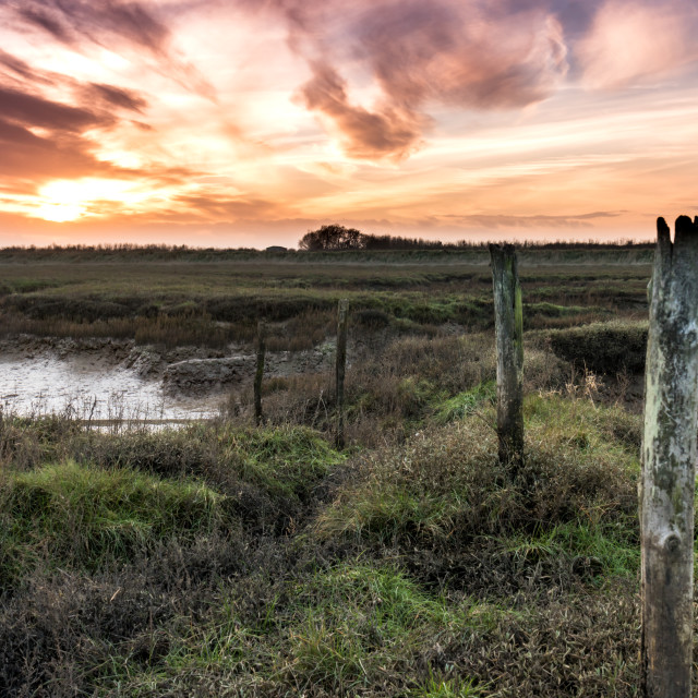 """""""Essex Marshes"""" stock image"""