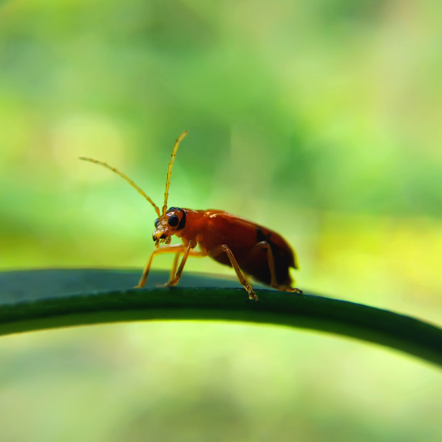 """a little insect"" stock image"