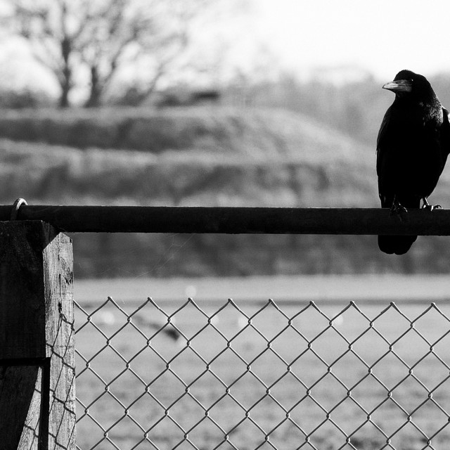 """Sitting on the Fence"" stock image"