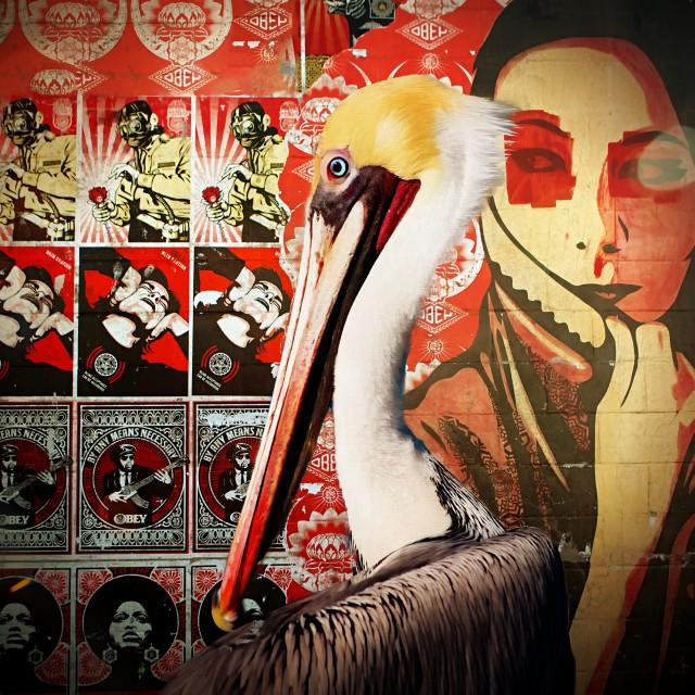 """""""Pelican Art"""" stock image"""