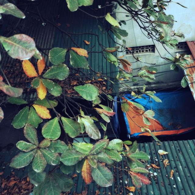 """Hanoi Slum"" stock image"