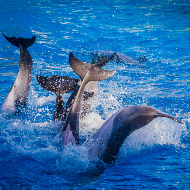 """Dolphin Tails"" stock image"