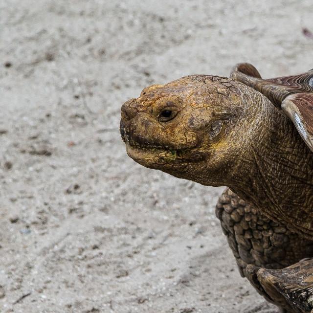 """""""Tortoise head"""" stock image"""