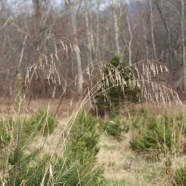 """tall grasses"" stock image"