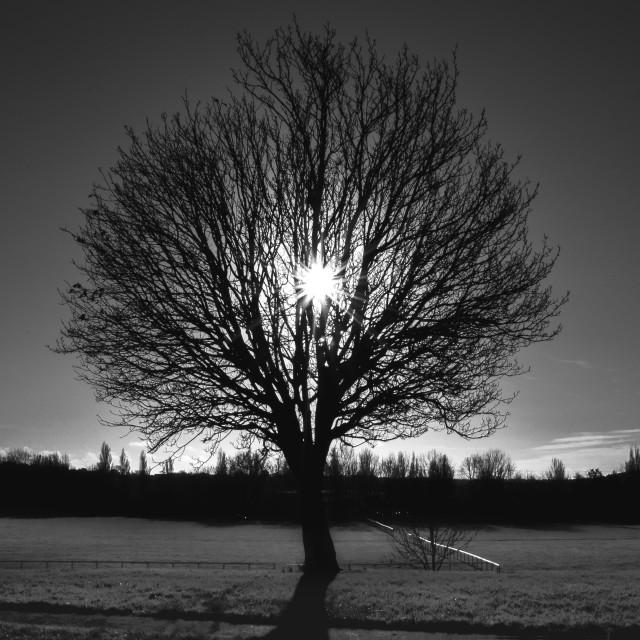 """""""Heart tree"""" stock image"""