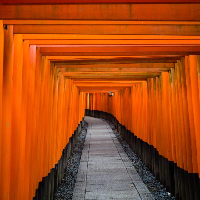 """Torii Path"" stock image"