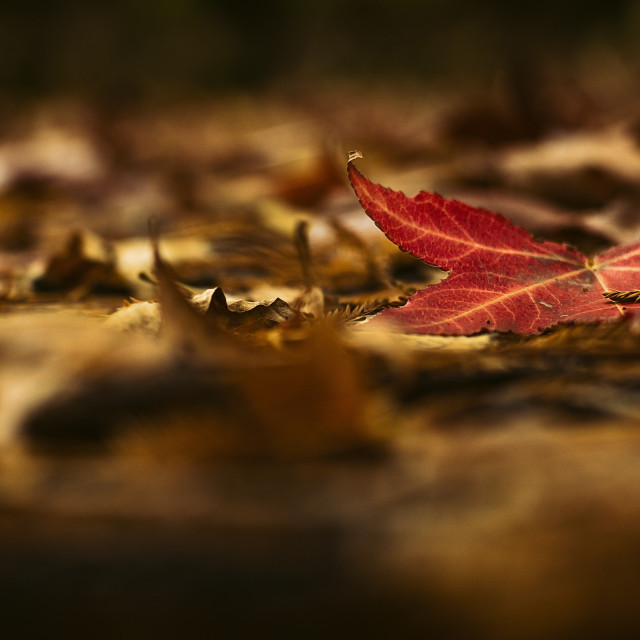 """Last Days of Autumn"" stock image"