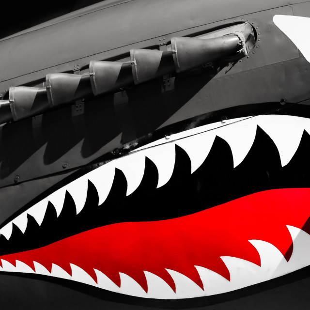 """Shark"" stock image"