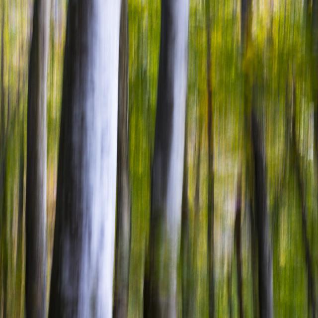 """""""Il bosco"""" stock image"""