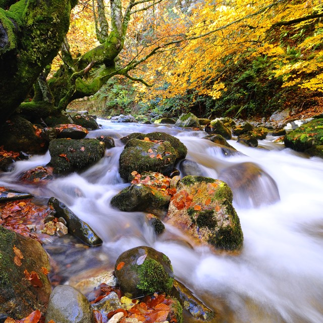 """Autumnal riverscape"" stock image"