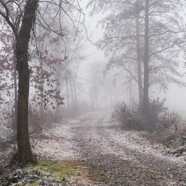 """Foggy path"" stock image"