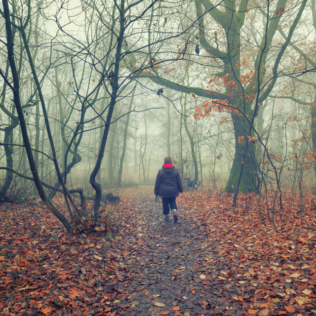 """Walking in the foggy woodland"" stock image"