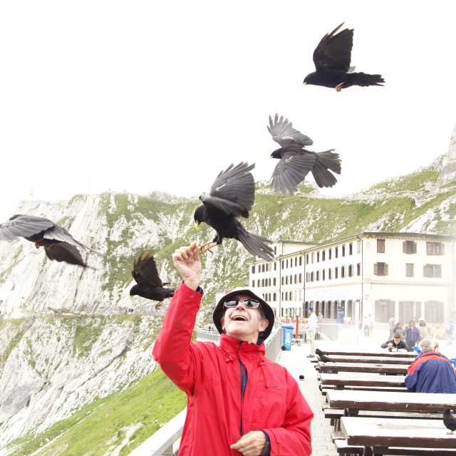 """Man feeding birds on Mt PIlatus Switzerland"" stock image"
