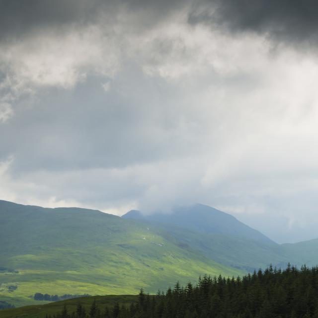 """""""Scottish Highland"""" stock image"""