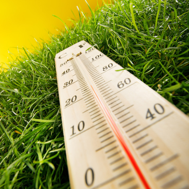 """""""thermometer and fresh grass on yellow background"""" stock image"""