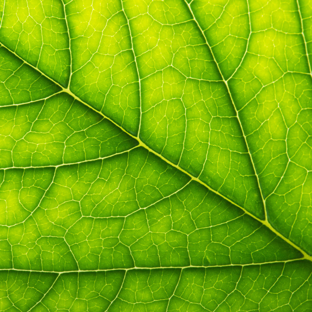 """Abstract green leaf texture for background"" stock image"