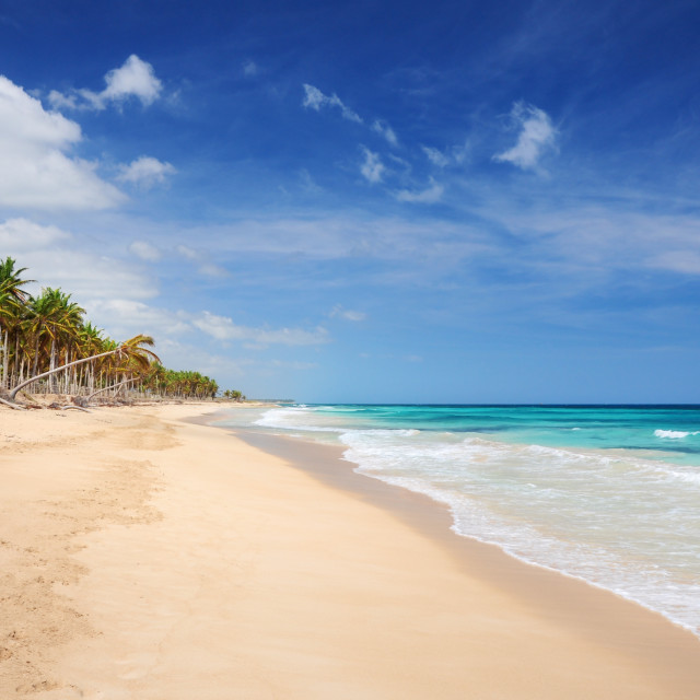 """""""Palm trees and sandy beach"""" stock image"""