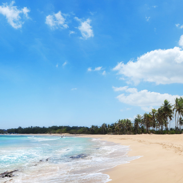 """""""Exotic Beach with palms and golden sands in Dominican Republic,"""" stock image"""