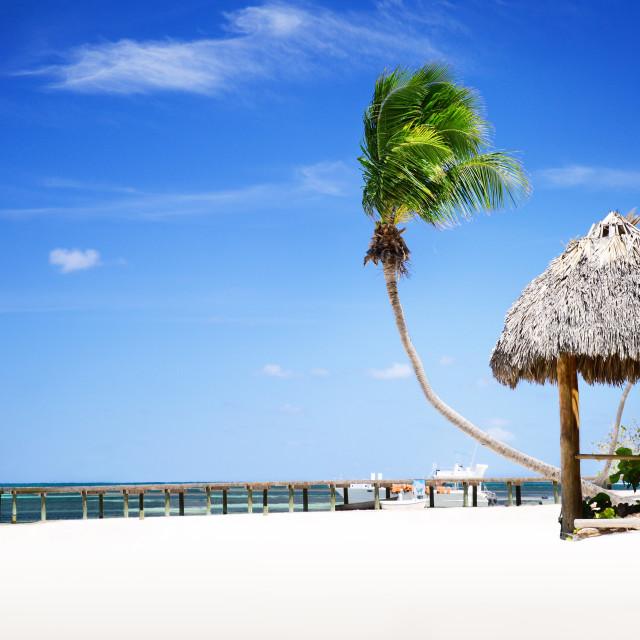 """Tropical Sandy Beach in Dominican Republic, Punta Cana"" stock image"