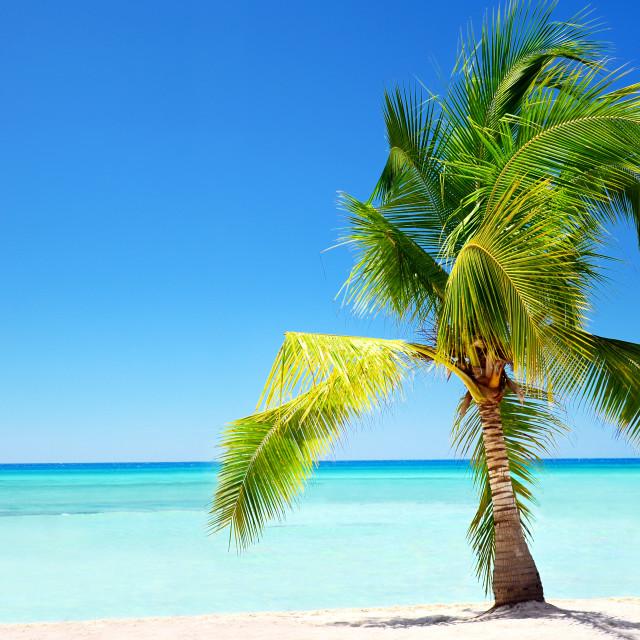 """Exotic palm tree in tropical Saona Island"" stock image"