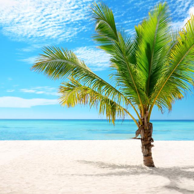 """Exotic beach and coconut palm tree Saona Island, Dominican Repub"" stock image"