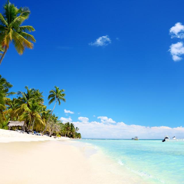 """Exotic Beach in Dominican Republic,"" stock image"