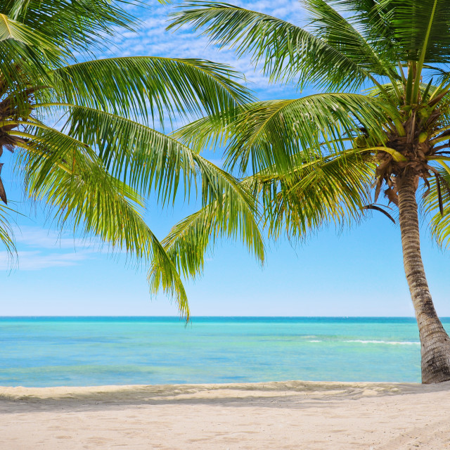 """""""Palm trees on the background of a beautiful carribean sea"""" stock image"""