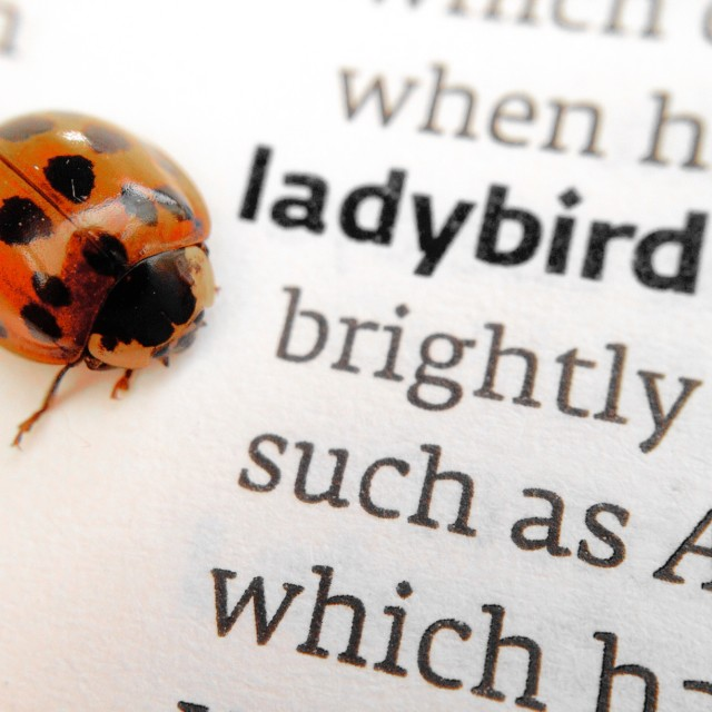 """""""Ladybird at side of dictionary description"""" stock image"""