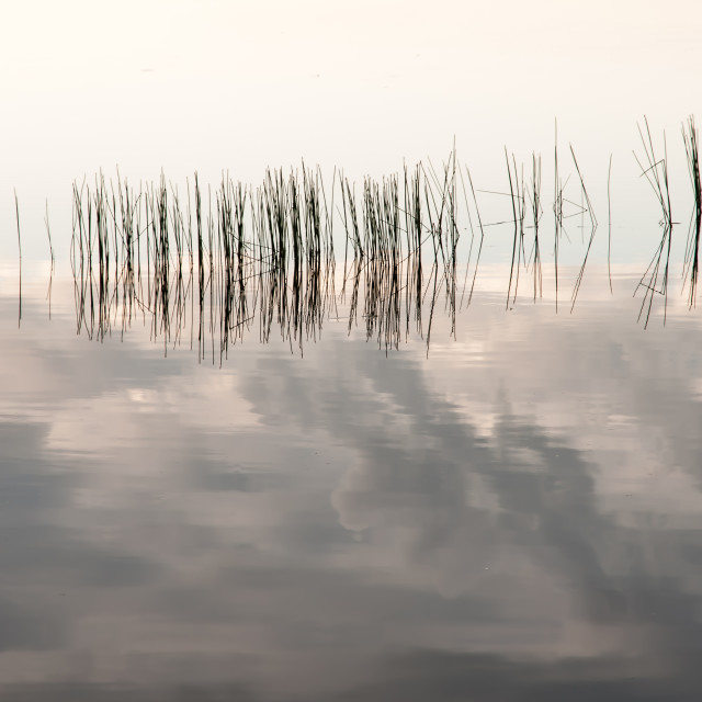 """Quiet water with cloud reflections and water grass"" stock image"