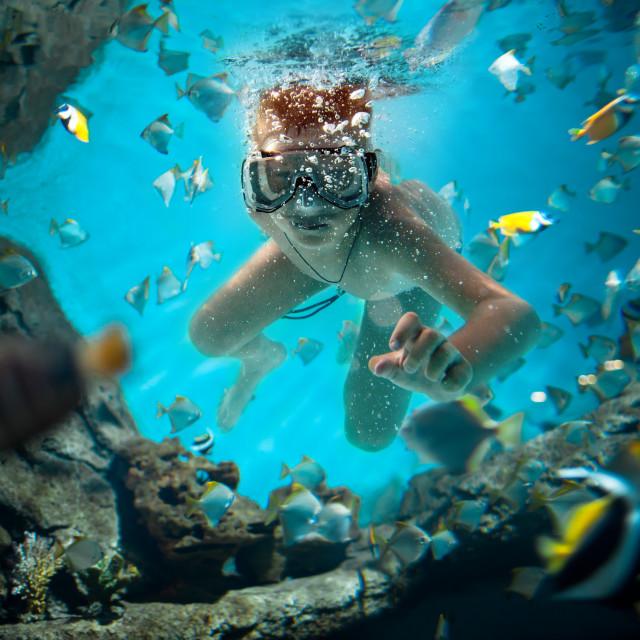 """freedive"" stock image"