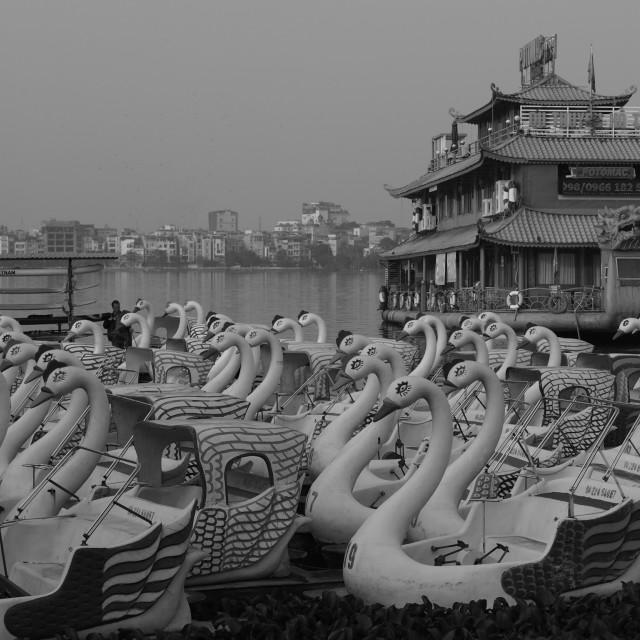"""""""Swans in Vietnam"""" stock image"""