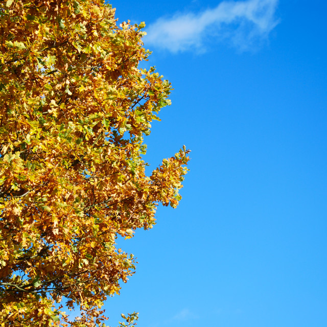 """Fall colored branches"" stock image"