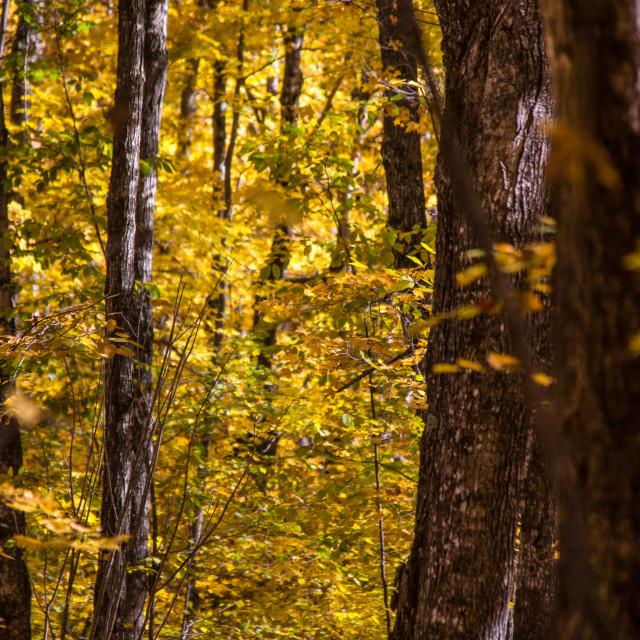 """Fall Trees"" stock image"