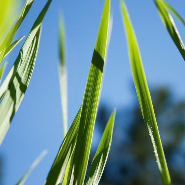 """Blades of Grass"" stock image"