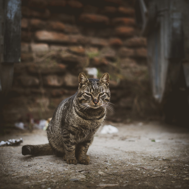 """Stray cat"" stock image"