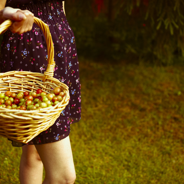 """Carrying gooseberries"" stock image"