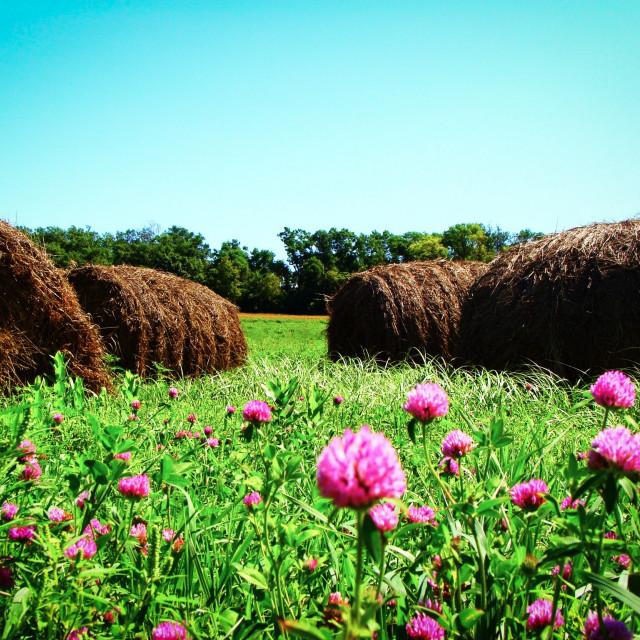 """Summer Hay"" stock image"