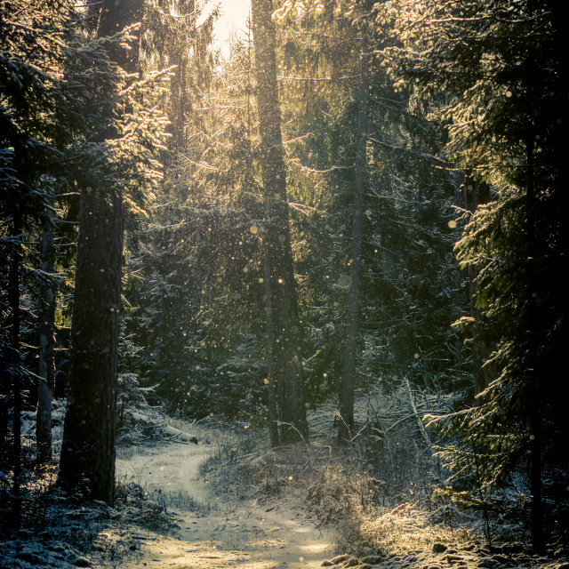 """""""Old Forest"""" stock image"""