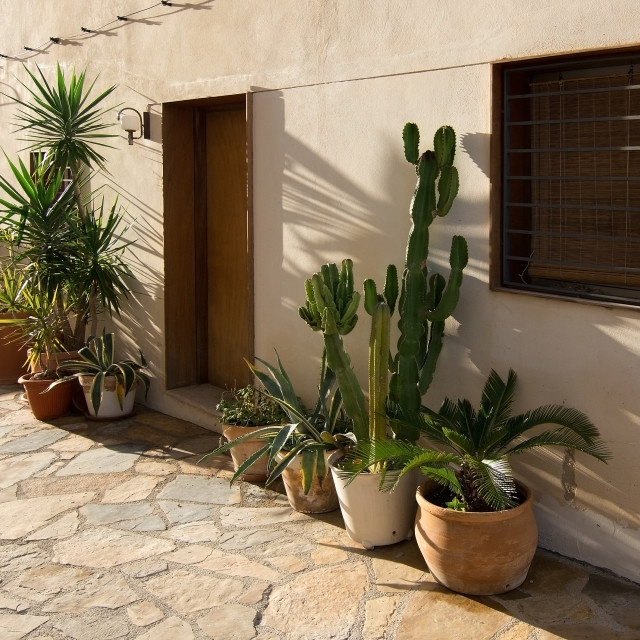 """Mediterranean plants outdoors"" stock image"
