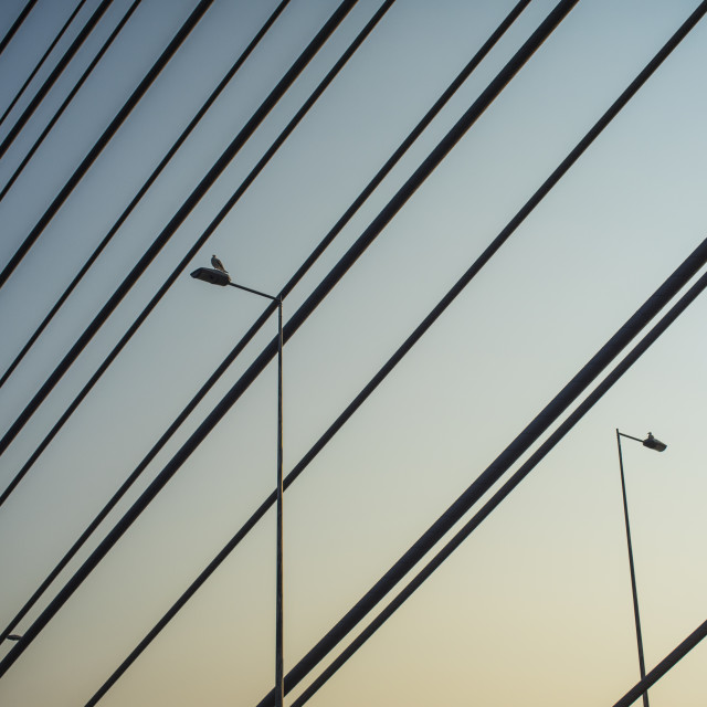 """Birds between cables"" stock image"