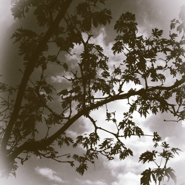 """""""Tree branches against clouds"""" stock image"""