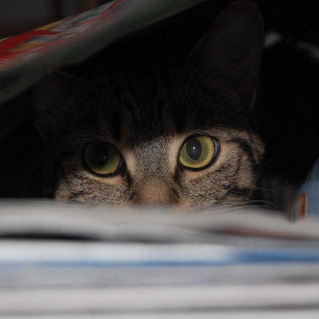 """Hiding cat"" stock image"