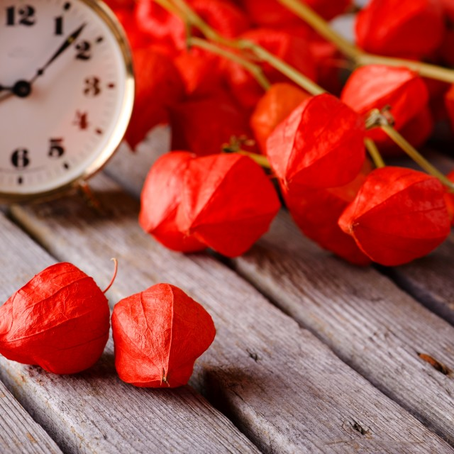 """""""Gooseberry blooms on grey board with alarm clock"""" stock image"""